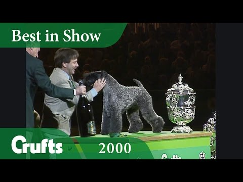 Kerry Blue Terrier wins Crufts Best In Show 2000 | Crufts Dog Show
