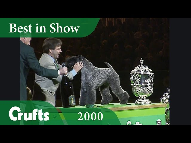 Kerry Blue Terrier wins Crufts Best In Show 2000 | Crufts Classics