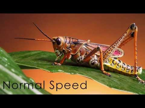 Crickets Song Slowed Down - Angelic Choir - AMAZING