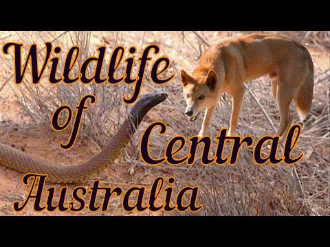Дикая природа Центральной Австралии
