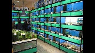 Цены В Латвии на рыбок