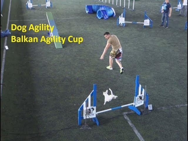 Σκύλος Dog Agility - Balkan Agility Cup 2017