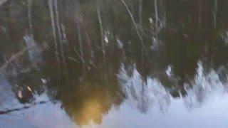 Придорожный лесной пруд, что повыше Коробовской в Кировской области(, 2016-05-04T02:41:31.000Z)