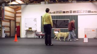 Pet Partners Team Evaluation Practice.mp4