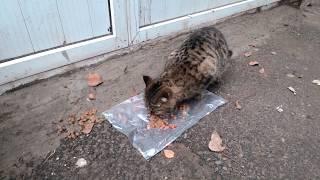 Добрый продавец овощного магазина подкармливает бездомную кошку!