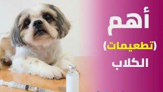 تطعيم الكلاب و اهميتة #تطعيم_الكلاب