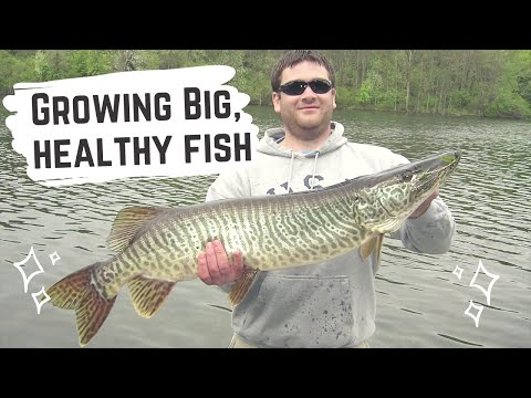 Breaking Through the Thermocline to Prevent Fish Kills