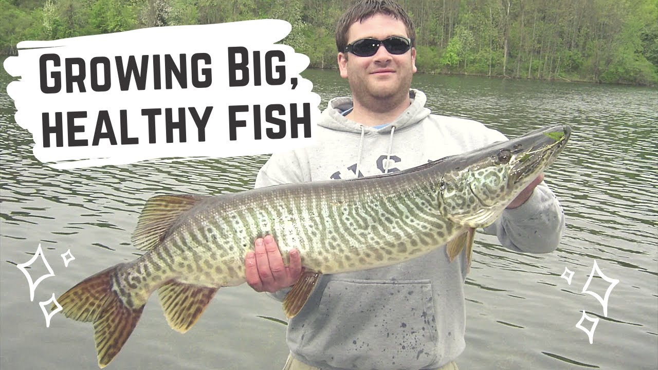 Largemouth Bass Movement in Flooding Events