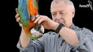 Jak oswoić papugę z dotykiem? (How to get parrot used to your touch?)