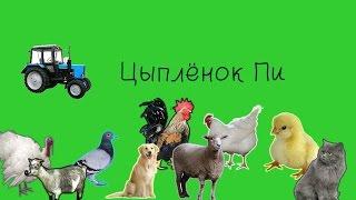 Клип Цыплёнок Пи