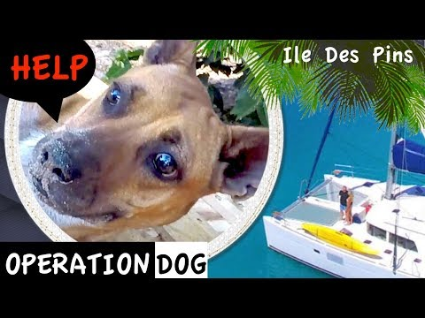 OPERATION DOG - Ile des Pins - Sailing New Caledonia