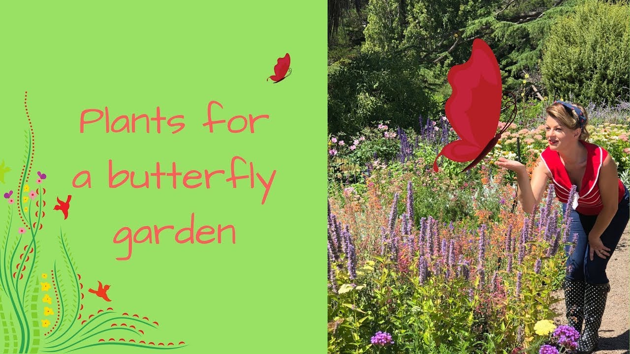 Grow A Butterfly Garden With Butterfly Attracting Plants U0026 Flowers // The  Gardenettes