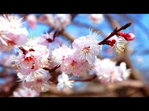 Music Relax Chinese|  Healing Chinese ZEN song of Anxiety & Stress | To pacify the frame & Mind | R