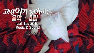[고양이가좋아하는소리]  Cat favorite Sound & Music |고양이분리불안 |고양이심리치료 |고양이수면유도 |반려동물테라피 |자연의소리ㆍ음악