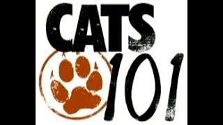 Cats101 Scottish fold '1080p'