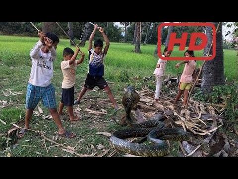 Top 10 Kj Kanal Børn Fanger Vand Slange Ved Hjælp Af Nettet - Hvordan Man Fanger Vand Slange I Camb