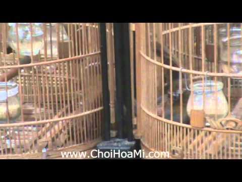 ChoiHoaMi.com - Trận 2: Giao lưu Họa Mi Chiến - Hà Nội 5-3-2011