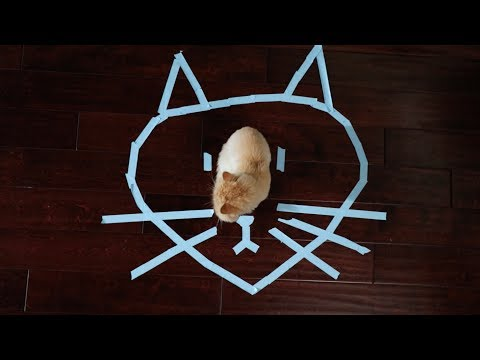 Download Youtube: How to trap your cat