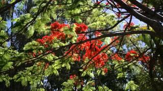 Kiri's Trees