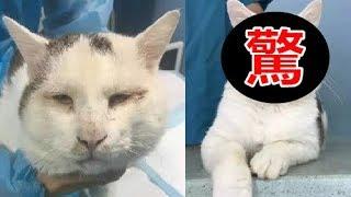 連貓都做了雙眼皮手術,你還在瞇瞇著眼?! thumbnail