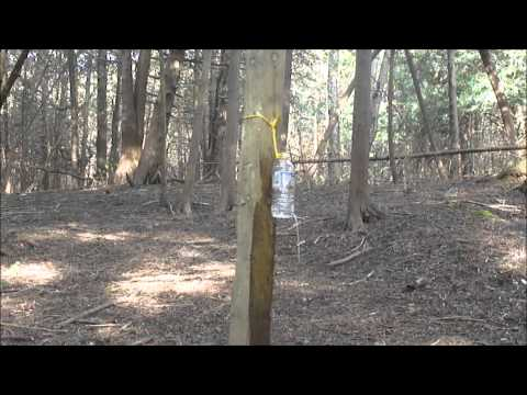 COLD STEEL SHANGHAI SHADOW VS A BOTTLE OF WATER ON A SPINNING TARGET