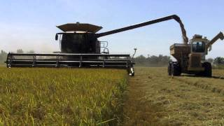 Early season rice harvest in Yuba County