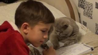 Кот учит уроки         Cat learns lessons