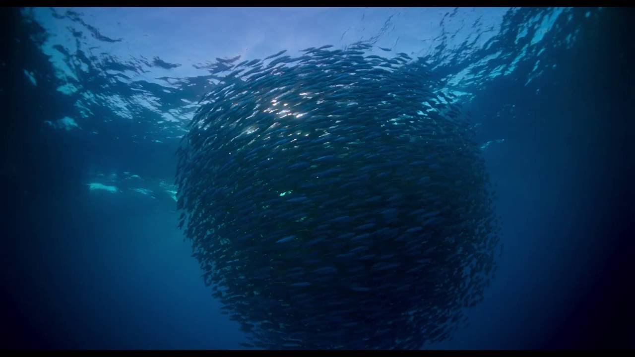 8b1ffa4a63 Cate Blanchett Ponders the Meaning of Life in Trailer for Terrence Malick's  Voyage Of Time: Life's Journey | Vanity Fair