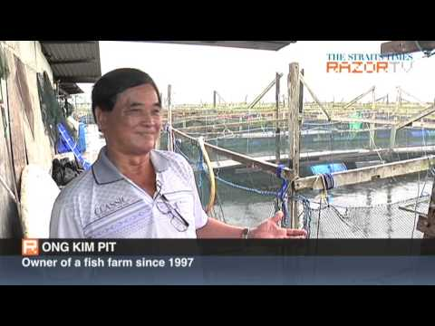 Our Singapore fish farms: From kelongs to wifi