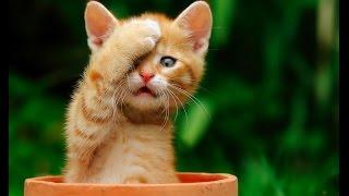 Смешные кошки 15 ● Приколы с животными лето 2014 ● Funny cats vine compilation ● Part 15