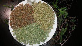 Простой рецепт консервированного зеленого горошка...горох, сорта, семена