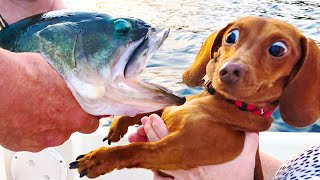 Funny Animals Doing Cute Things ❤️ -  Funny Dogs 🐶 And Cats 😹  Reaction