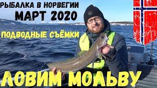 Рыбалка в Норвегии с лодки Морская щука Подводные съёмки Ловля мольвы Норвегия Рыбалка