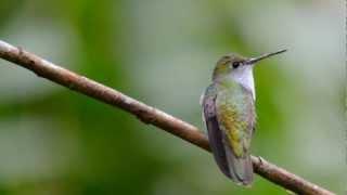 BIRDS AND WILDLIFE OF INKATERRA, PERU