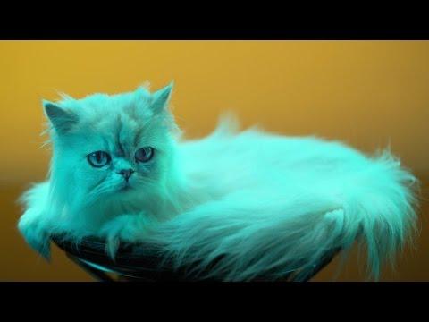 Tierisch guter Sound / Gewaltige Bässe, kraftvoller Sound und coole Lichteffekte: Das neue Home-Audio-System GTK-XB7 ist das perfekte Gadget für Party Animals, wie ein neues Video von Sony beweist