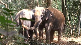 Music Encounter with Elephants in Kerala, India
