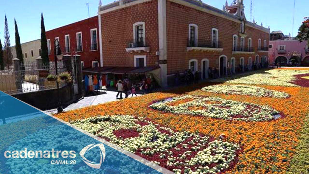 Ent rate tapete monumental de flores en atlixco puebla for Viveros de plantas en atlixco