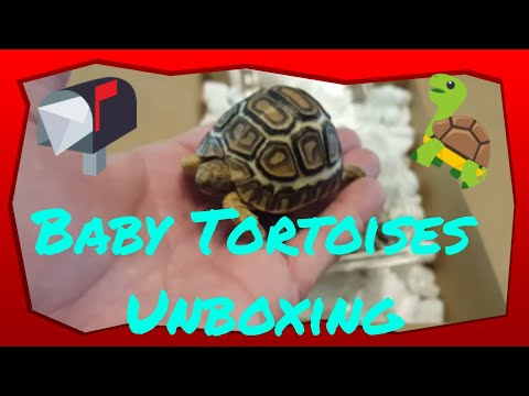 Unboxing Some Rare Turtles And Tortoise