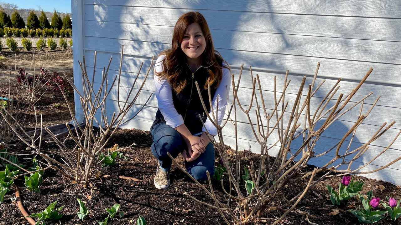 Download Pruning & Fertilizing My Hydrangeas! ✂️🌿💚// Garden Answer