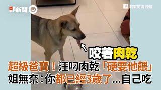 高雄米克斯犬叼肉乾 硬要給狗爸餵 姐姐無奈:自己吃|寵物