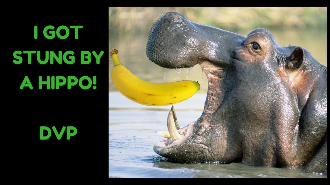 Dank Hippo Memes