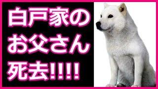 白戸家のお父さん犬、ソフトバンクCM初代の白い北海道犬「カイくん」天...