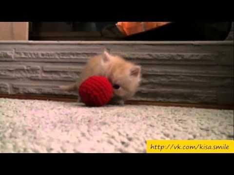 Жизнь прекрасна! Kisa Smile Прикольные фото и видео с кошками