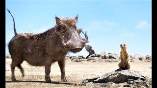 КОРОЛЬ ЛЕВ - Тимон и Пумба Находят Малыша Симба / Фрагмент фильма/ Walt Disney
