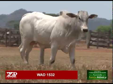LOTE 44 - WAD 1532