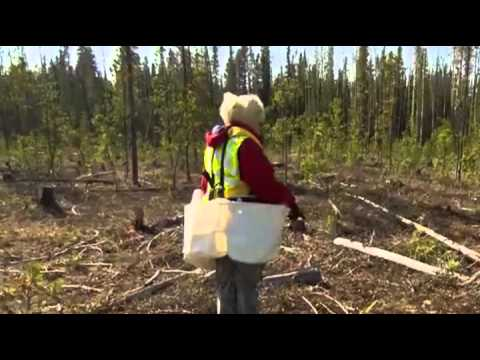Worlds Toughest Jobs | Season 1 Episode 6 – Canadian Forestry - Documentary