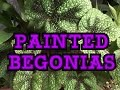 GARDENING GUIDE HOW TO GROW REX MASONIANA BEGONIA S AS GARDEN GREENHOUSE OR HOUSE PLANTS mp3