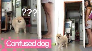 Owner Confuses Dog by Hiding Behind Door 😂😂😂