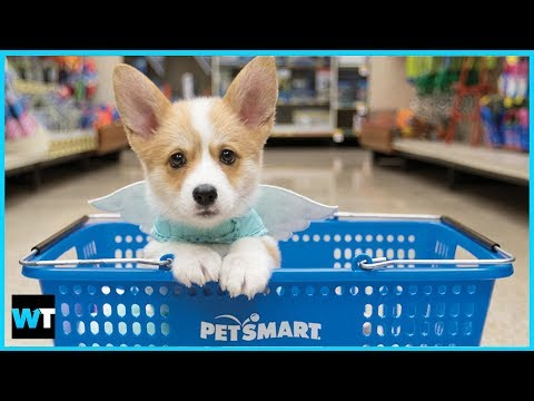 Dogs Mysteriously Dying Because of PetSmart?!