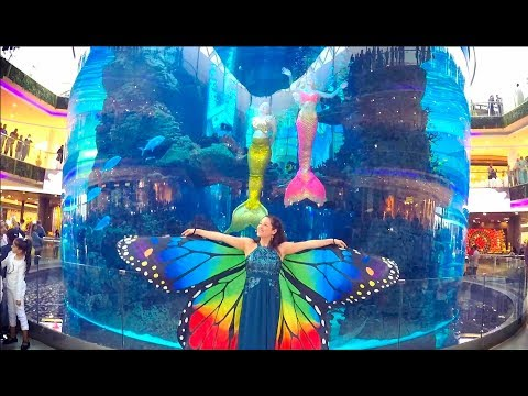 The Mermaids and the Magic Butterfly!